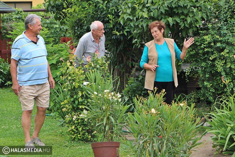 Hetedszer versenyeznek a kertészek
