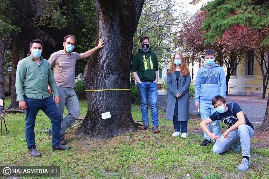 Védik és vizsgálják az idős fákat