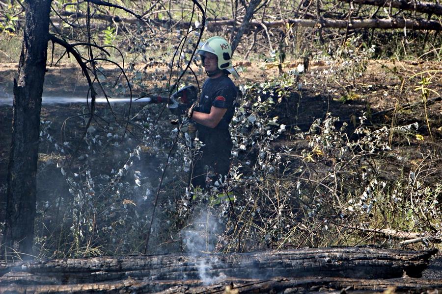 Négy hektáron égett a fenyves Halas határában (galéria)