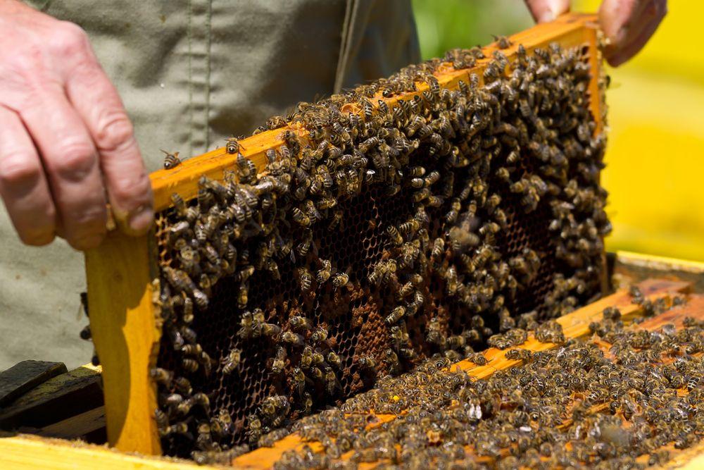 Méhegészségügyi zárlat lépett életbe