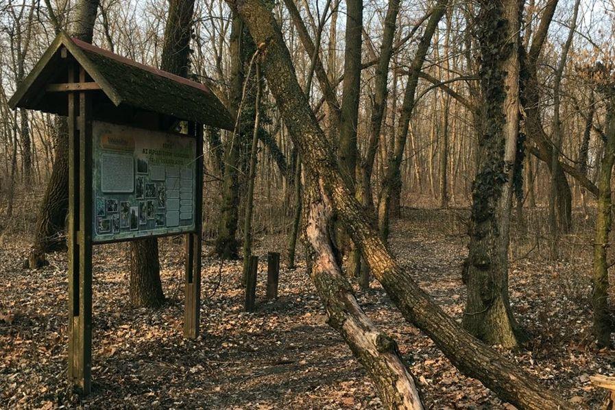Veszélyes fák Sóstón: az illetékesek már vizsgálódnak