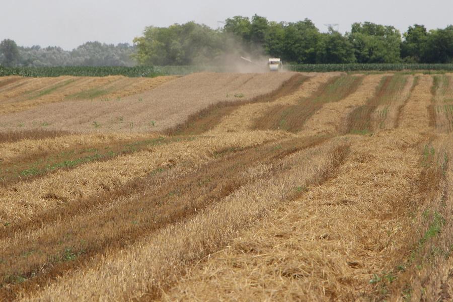 Befejeződött az aratás