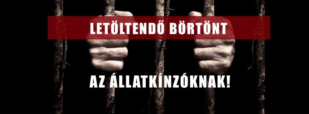 Balotai állatkínzó: az ügyész letöltendő börtöntbüntetést indítványozott
