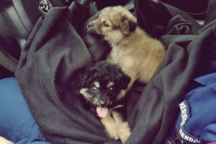 Kutyákat mentettek a határrendészek Kelebiánál