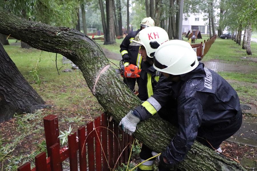 Nagyméretű faág zuhant a játszótér kerítésére