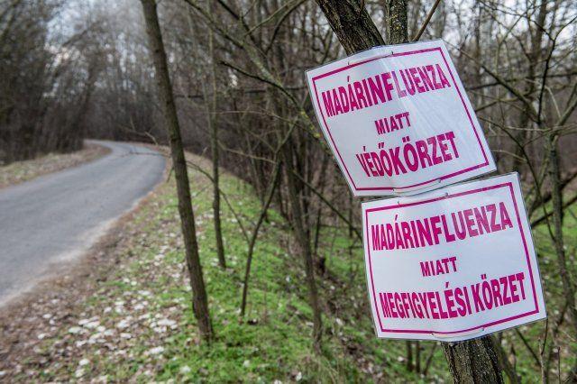 Védő- és megfigyelési körzeteket rendeltek el a madárinfluenza miatt