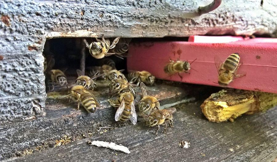 Védekezzenek a méhatka ellen