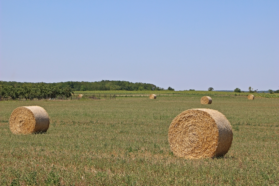 Vége felé jár az aratás