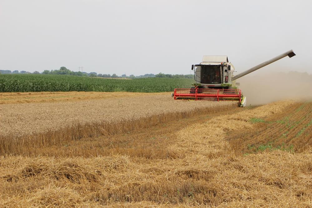Elindult az aratás