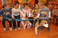 Az Állatok Világnapján tettek fogadalmat a gyerekek