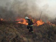 Több helyen égett az erdő