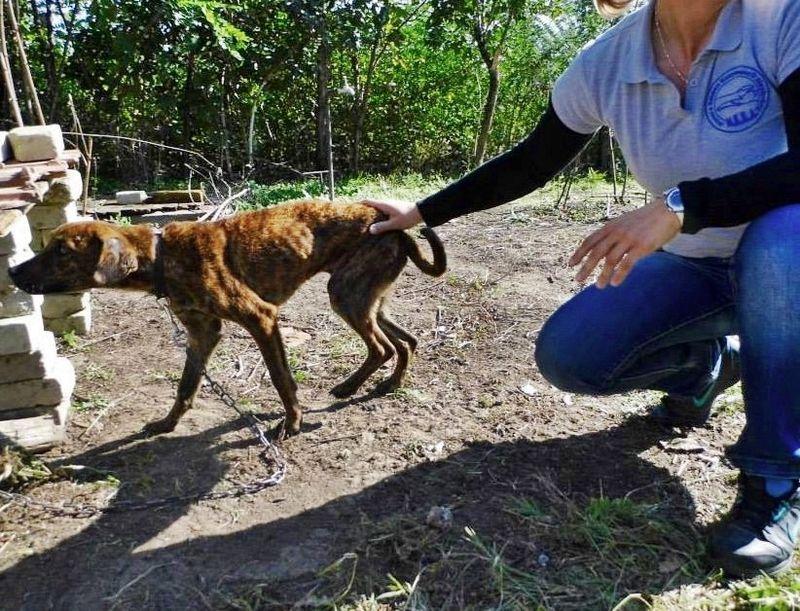 Éhező, vérző kutyát mentettek