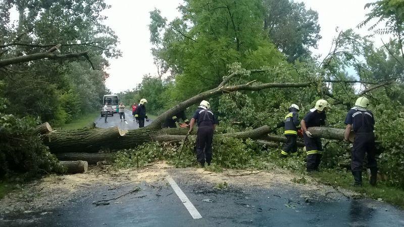 Hatalmas fát csavart ki a szél