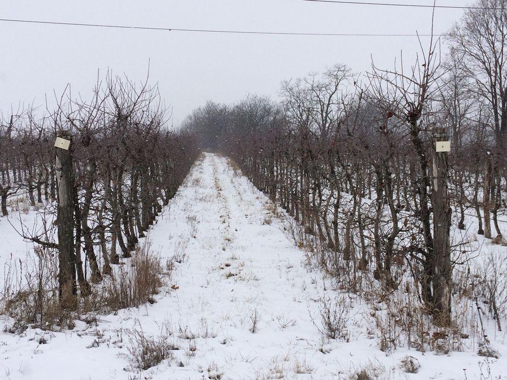Kell a hó a mezőgazdaságnak