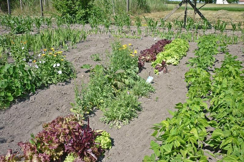 Idén is versenyeznek a kertek