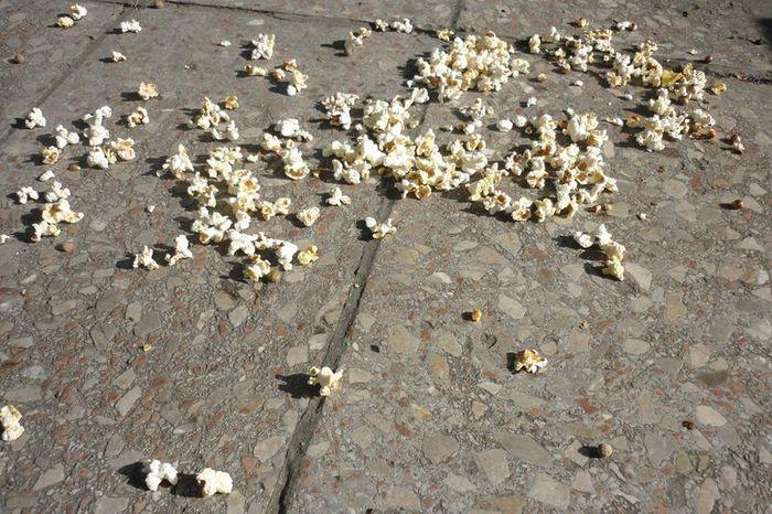 Szétszórt kukorica a főtéren