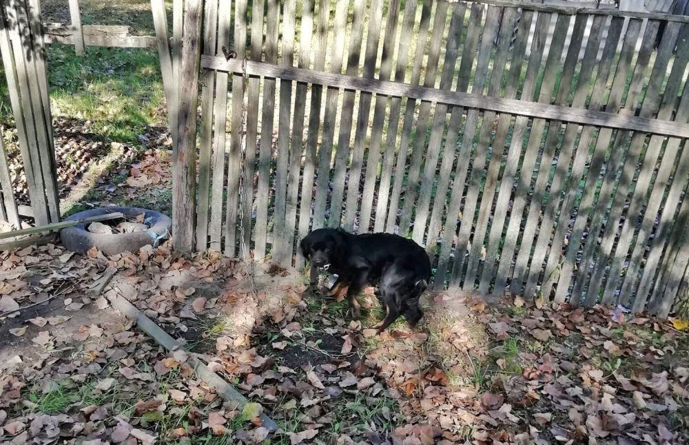A kerítéshez kötötték és otthagyták a kutyát