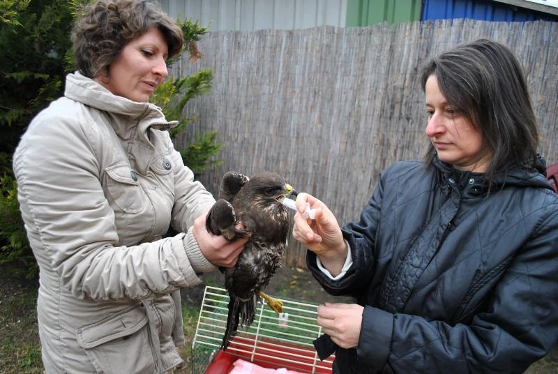 Meglőtt madarat és vágott nyakú kutyát mentettek