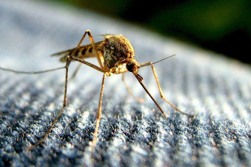 Pár nap és jön a szúnyoggyérítés Halason