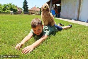 (►) Hogyan vigyázzunk a kánikulában a kutyusokra?