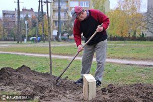 Fát ültettek Mester Sándor tiszteletére