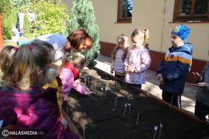 Kertészkedés a Felsővárosi-óvodában