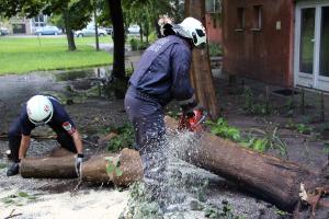 Fákat döntött a halasi vihar (galéria)