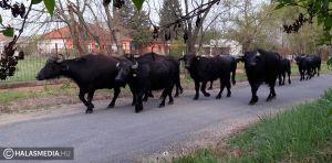 kecskeméti baptista gyülekezet élő közvetítés