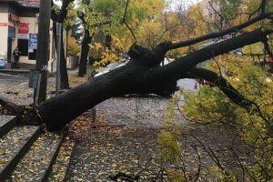 Kidőlt egy fa a Vasút utcában