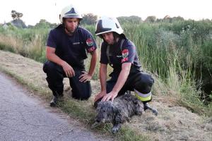 Kutyát mentettek a halasi tűzoltók
