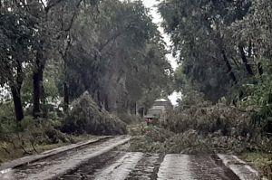 (►) Halas megúszta a vihart, de a környékünkön óriási a pusztítás