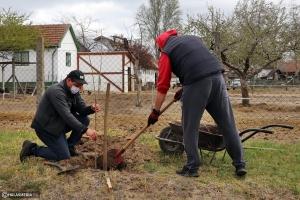 Csörgőfákat ültettek a Platán utcában (galéria)