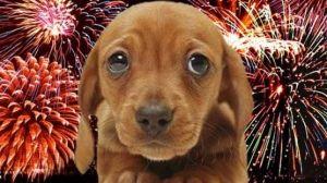 Vigyázzon kutyájára a tűzijáték idején!