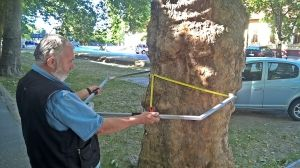 Egyre több fát vizsgálnak meg az új műszerrel
