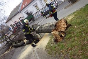 Kidőlt egy fa a Táncsics utcán